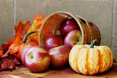 Autumn Apples Royalty Free Stock Photos