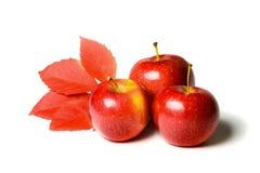 Autumn Apples Photo stock