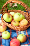 Autumn Apples Lizenzfreie Stockfotografie