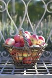 Autumn apples. Apple in a basket Stock Image