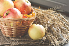 Autumn apples in basket with wheat ears nearby Royalty Free Stock Image