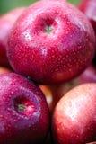 Autumn apples. The big red autumn apples Stock Photo