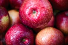 Autumn apples. The big red autumn apples royalty free stock photos