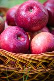 Autumn apples. Big red apples in the Basket stock photography