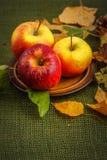 Autumn apples Royalty Free Stock Photos