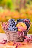 Autumn apples and grape Stock Photos