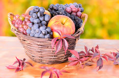 Autumn apples and grape Stock Photography
