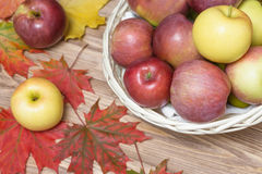 Autumn apples and maple leaf.  stock photo
