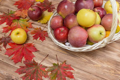 Autumn apples and maple leaf.  stock photos