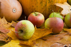 Autumn apples and pumpkins. Against foliage Royalty Free Stock Photos