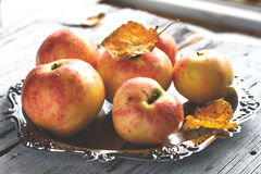 Autumn apples on silver tray near the window Royalty Free Stock Images