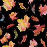 Autumn aqwarelle maple leaves and seeds on black royalty free illustration