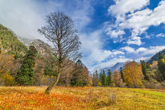 Autumn in Arkhyz Royalty Free Stock Photo