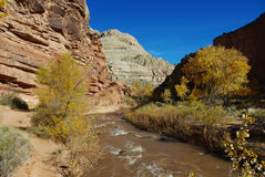 Autumn around Fremont River, Utah. Autumn around Fremont River near Fruita, Utah Royalty Free Stock Image