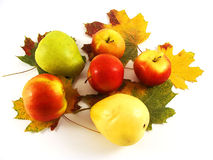 Autumn Arrangement. Apples,pears and maple leaves are on a white background Royalty Free Stock Photography