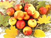 Autumn Arrangement. Arrangement of apples,dry grass and maple leaves Royalty Free Stock Images