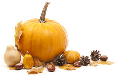 Autumn arrangement. Orange pumpkins with chesnuts for halloween decoration Royalty Free Stock Image