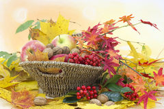 Autumn arrangement. Beautiful arrangement of autumn leaves and red apples and walnuts Stock Photos