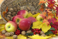 Autumn arrangement Royalty Free Stock Images
