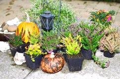 Autumn Arrangement Arkivbilder