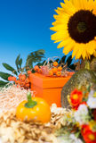 Autumn arrangement around gift box Stock Photo