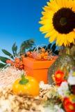 Autumn arrangement around gift box Stock Photo