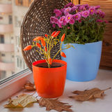 Autumn arrangement from decorative pepper and chrysanthemums Stock Image