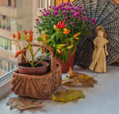 Autumn arrangement from decorative pepper and chrysanthemums Royalty Free Stock Photography