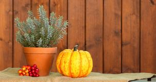 Autumn arrangement. Autumn arrangement with hebe flower, pots, pumpkin and red berries on wooden background Royalty Free Stock Images
