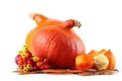 Autumn arrangement with Hokkaido pumpkins Royalty Free Stock Photos