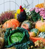 Autumn arrangement with pumpkins Royalty Free Stock Images
