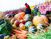 Autumn arrangement with pumpkins Royalty Free Stock Photos