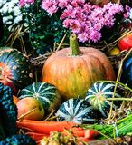Autumn arrangement with pumpkins Stock Photos