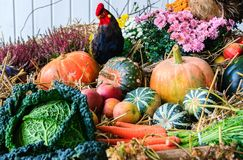Autumn arrangement with pumpkins Stock Photo