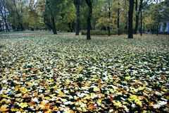 Autumn arrived in city, urban nature. First yellow leaves in square, public garden. Fallen leaves and grass in raindrops. Walk in Park, autumn mood royalty free stock photo