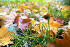 Autumn arrived in city, urban nature. First yellow leaves in square, public garden. Fallen leaves and grass in raindrops. Walk in Park, autumn mood stock photo