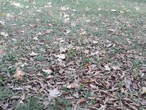 And autumn arrived in the southern hemisphere. Dried leaves fallen on the floor of the square autumn arrived southern hemisphere stock photography