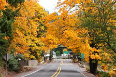 Autumn Arrives. Fall brings beautiful colors with trees that hang beautiful leaves over the highway Stock Photos