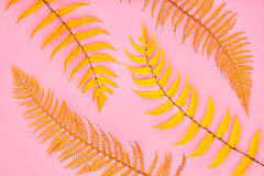 Autumn Art. Fall Fashion.Minimal.Fern Leaf on Pink. Autumn Arrives. Fall Leaves Background. Fern Leaf Fashion Design. Art Gallery. Minimal. Yellow fern Leaf on Royalty Free Stock Photo