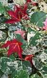 Autumn Arrives i Grand Rapids Royaltyfri Fotografi