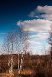 Autumn at Arshan, China. Chinas Inner Mongolia aershan the autumn scenery Royalty Free Stock Photography