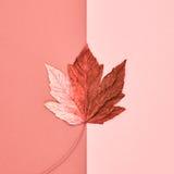 Autumn Art. Fall Fashion. Minimal. Maple Leaf. Autumn Arrives. Fall Leaves Background. Fall Fashion Design. Art Gallery. Minimal.Maple Leaf on Pink. Autumn stock images