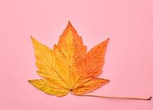 Autumn Art. Fall Fashion. Minimal. Maple Leaf Royalty Free Stock Photos