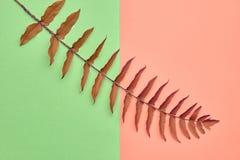 Autumn Art Gallary. Fall Fashion.Minimal.Fern Leaf Royalty Free Stock Photos