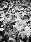 Autumn. Artistic look in black and white. Royalty Free Stock Photography