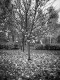Autumn. Artistic look in black and white. Autumn in Gdansk, Poland Stock Photo
