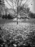 Autumn. Artistic look in black and white. Stock Photography
