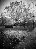 Autumn. Artistic look in black and white. Royalty Free Stock Photo