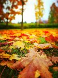 Autumn. Artistic look in vintage vivid colours. Stock Photos