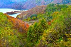 Autumn ash and mountain lake Stock Image
